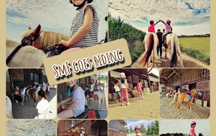 Reiten, Hof, Pferde, Ponys, Lernen, Wissen, Natur, Tierliebe, Freizeit, Striegeln, Reiten,